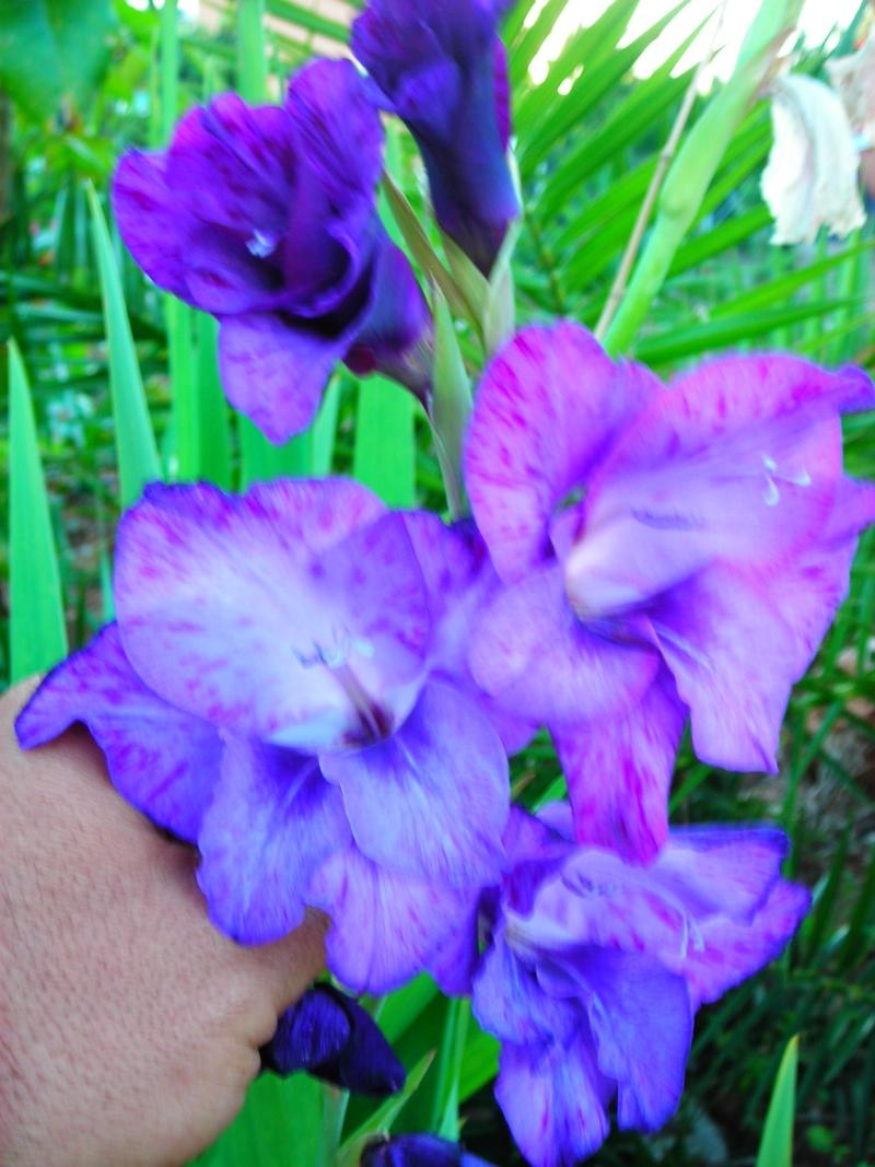 Nuestro jardín de Sa Possessió - Página 2 186_fl11