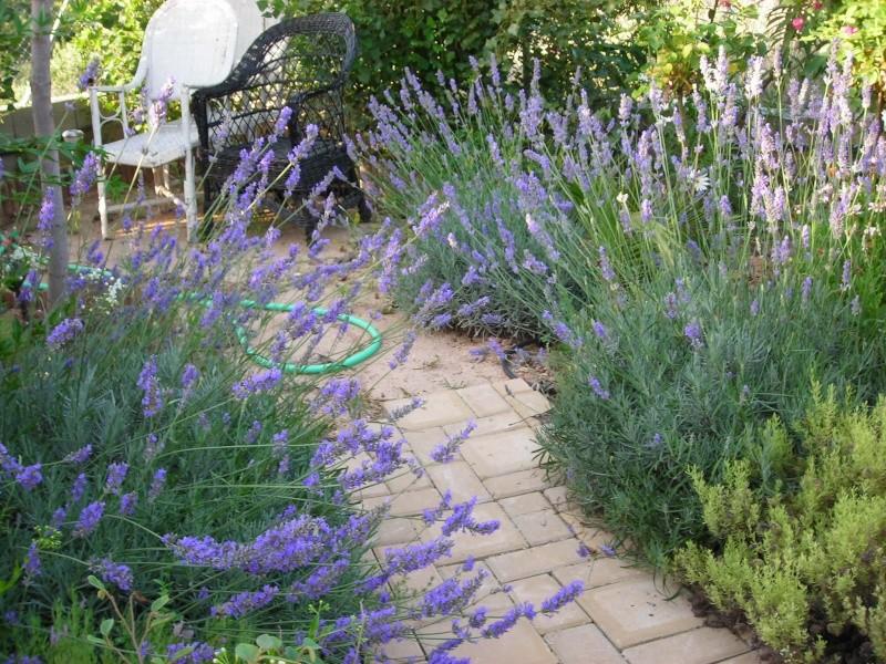 Nuestro jardín de Sa Possessió - Página 3 187_fl10