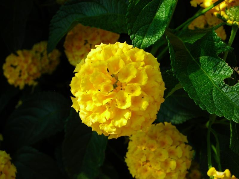 Nuestro jardín de Sa Possessió - Página 3 189_fl10