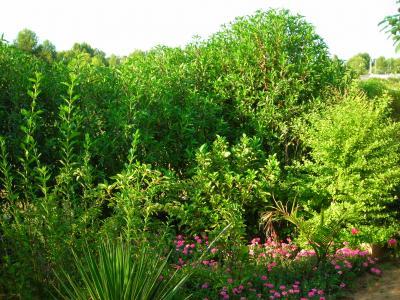 Nuestro jardín de Sa Possessió Aguaca10