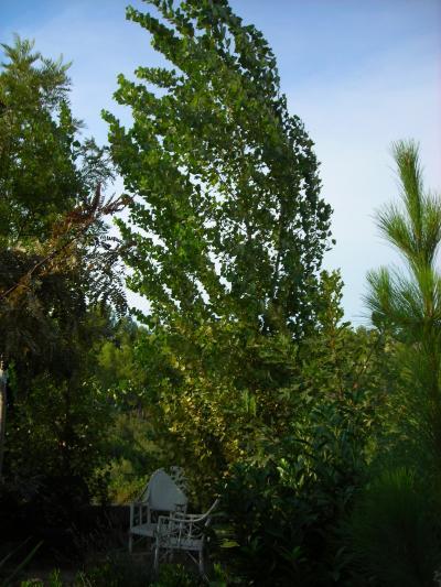 Nuestro jardín de Sa Possessió Chopos10