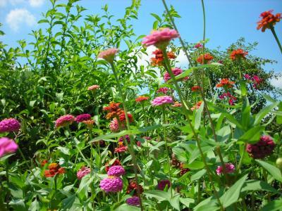 Nuestro jardín de Sa Possessió Cinias10