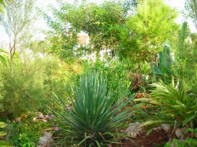 Nuestro jardín de Sa Possessió Drago10