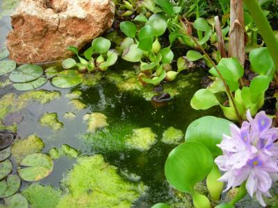 Nuestro jardín de Sa Possessió Lago_210