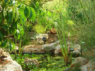 Nuestro jardín de Sa Possessió Lago_310