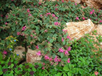 Nuestro jardín de Sa Possessió Lorope10