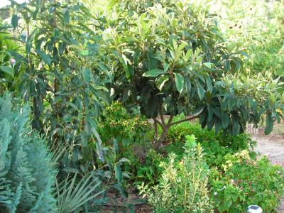 Nuestro jardín de Sa Possessió Nisper10