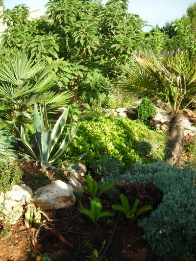 Nuestro jardín de Sa Possessió Ombu10