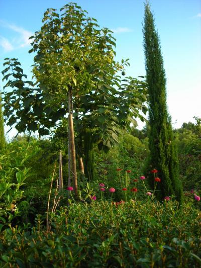 Nuestro jardín de Sa Possessió Paulon10