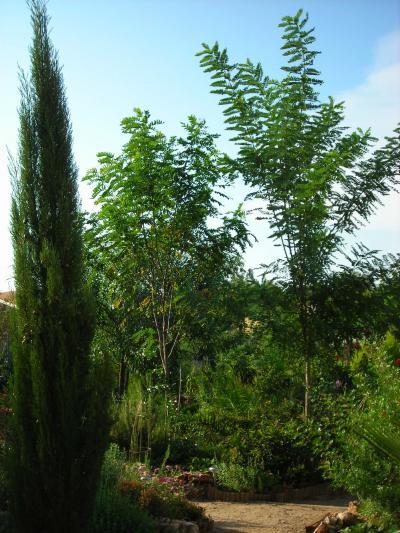 Nuestro jardín de Sa Possessió Robini10