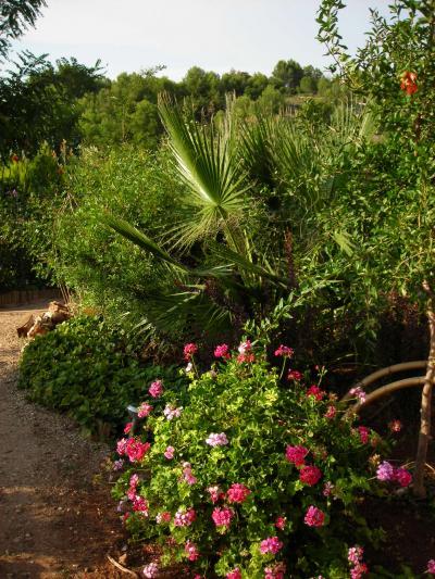 Nuestro jardín de Sa Possessió Washin11