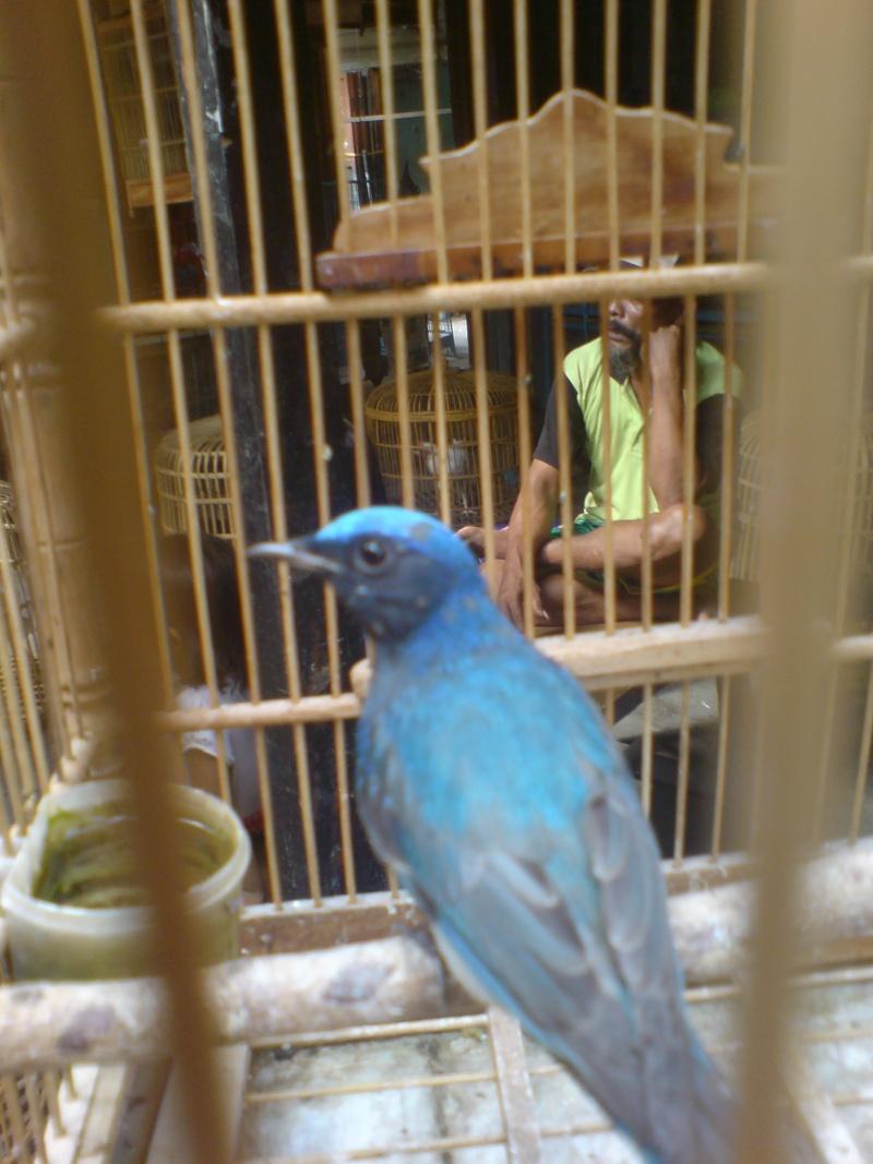 Oiseaux à Kuala Lumpur Dsc01510