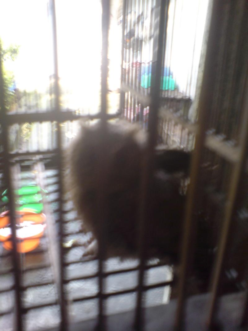 Oiseaux à Kuala Lumpur Dsc01513