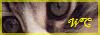 Wild Cat >> Partenariat. Bouton11