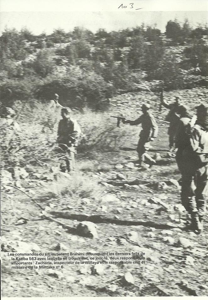 Bataille de Saida - Page 2 Algeri39