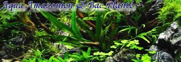 Aqua Amazonien & Bac Planté
