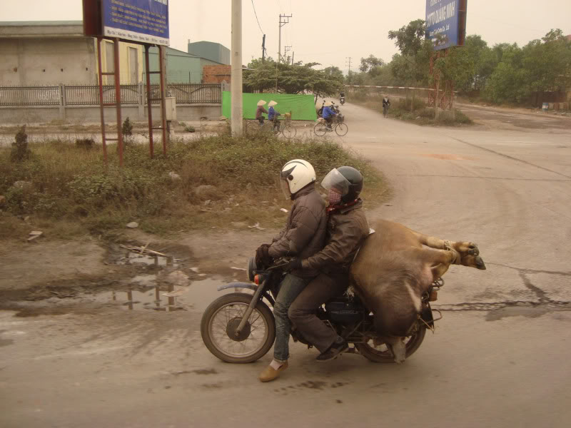 Photos insolite - Page 3 Cambod11