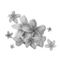 voici une petite explications ainsi que des tubes brush(pinceaux) Fleur310