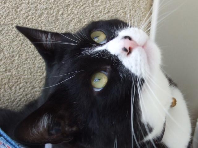 Meow !! Photo_11