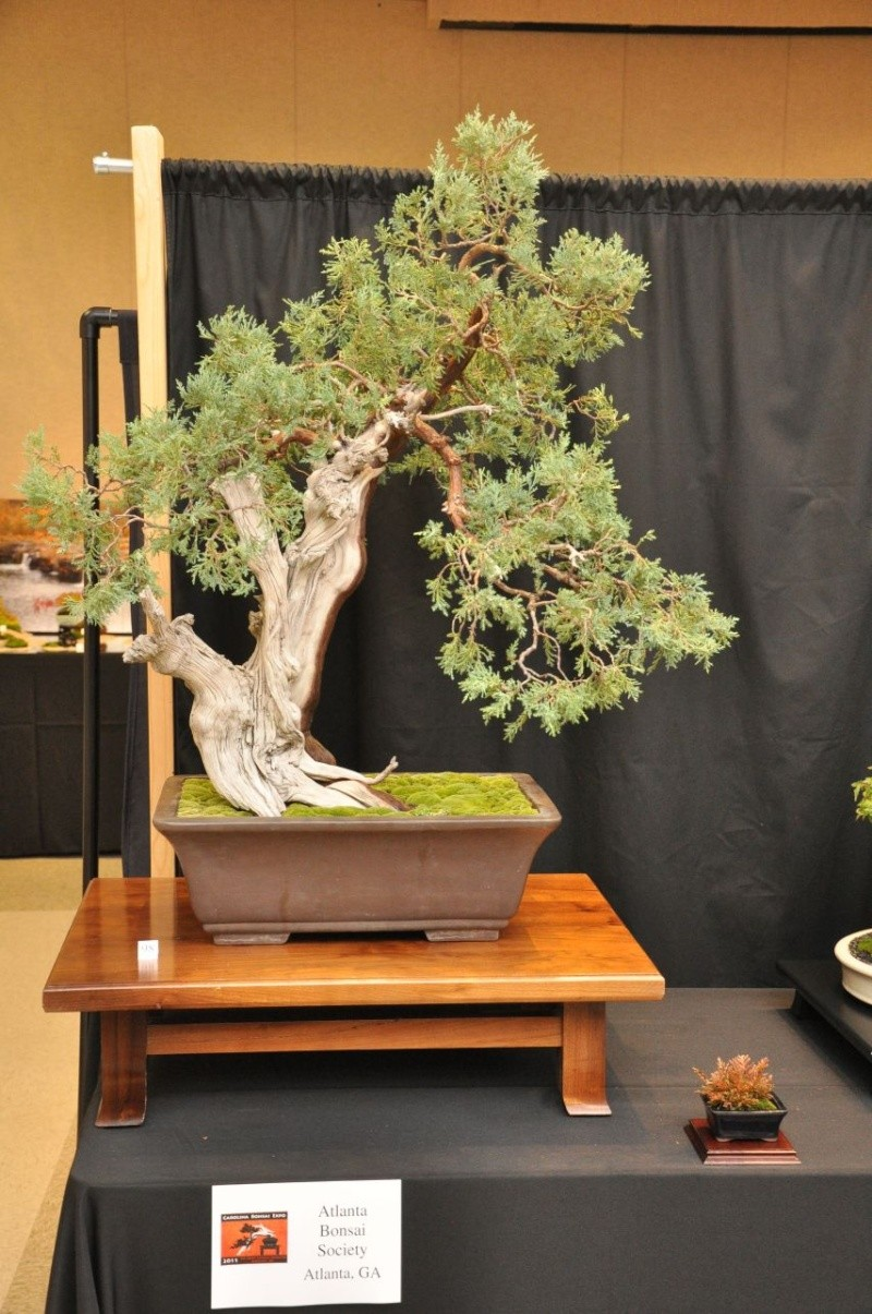 A collected Rocky Mountain Juniper Secure10