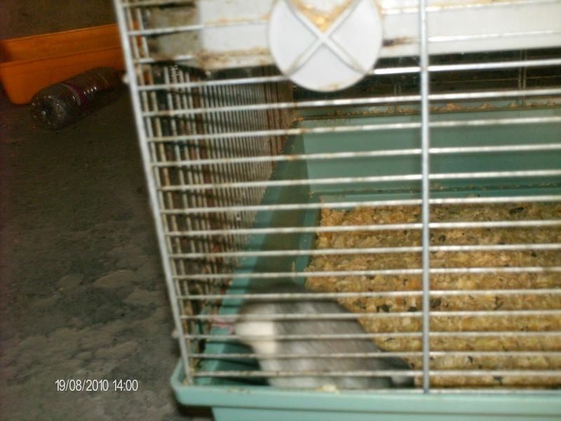 A votre avis dois-je adopter ou pas? Rats_a12