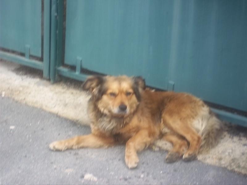 trouvé un chien famille Hudde Chien_14