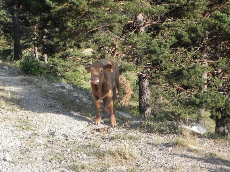 Vancances Juillet 2012 dans les Pyrénées Espagnoles Dscn5350