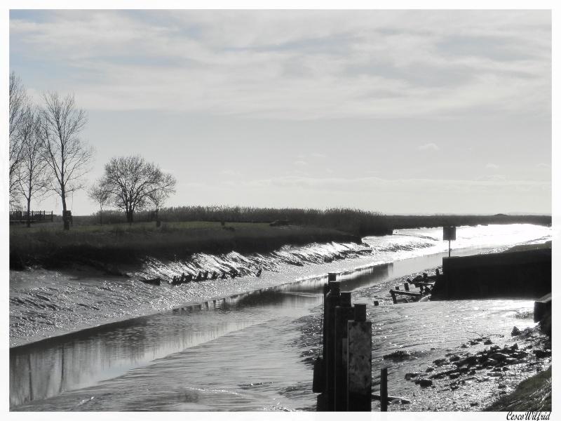 canaux de l'estuaire de la gironde a marée basse. Dscn0714