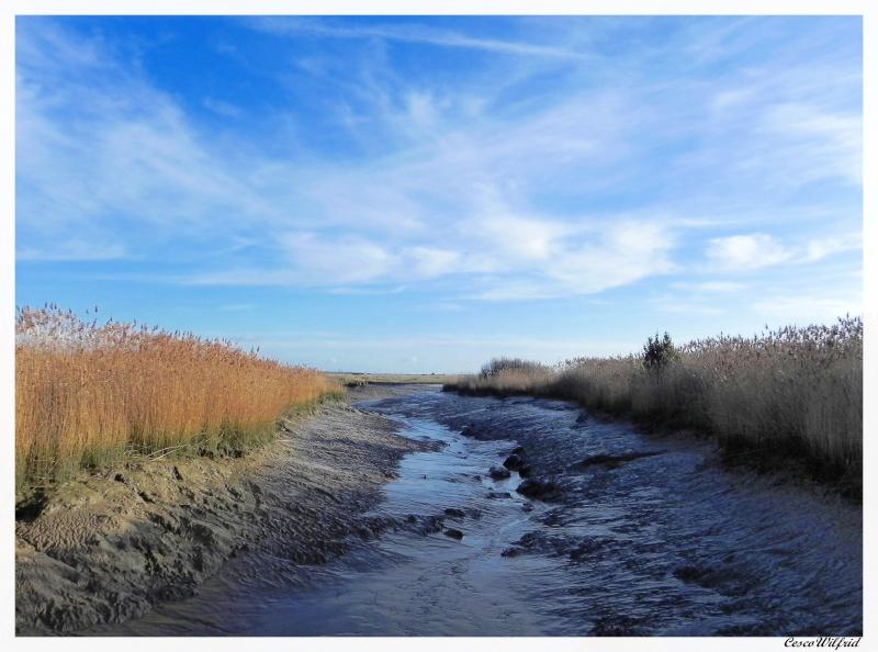 canaux de l'estuaire de la gironde a marée basse. Dscn0716