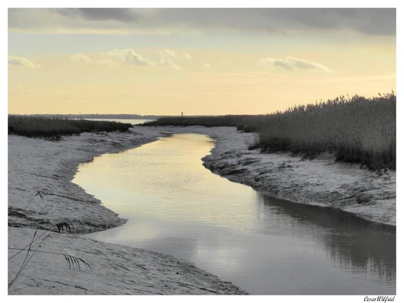 canaux de l'estuaire de la gironde a marée basse. Dscn0718