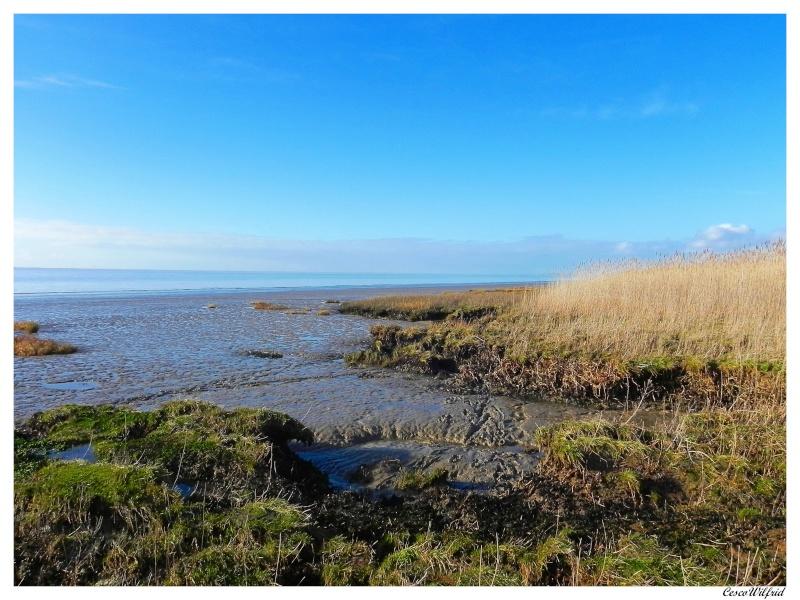 canaux de l'estuaire de la gironde a marée basse. Dscn0719