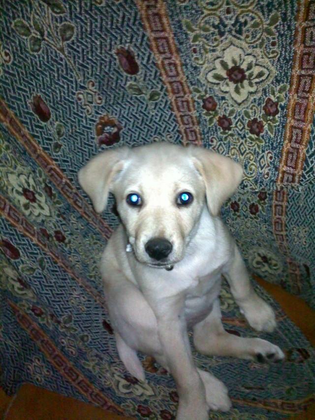 Se regala perra (Cáceres) 28062010