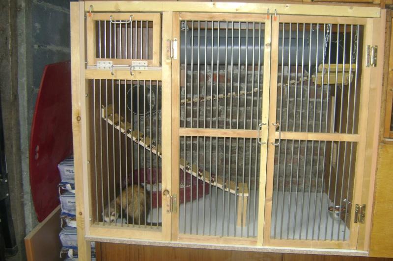 Leurs cages Dsc03210