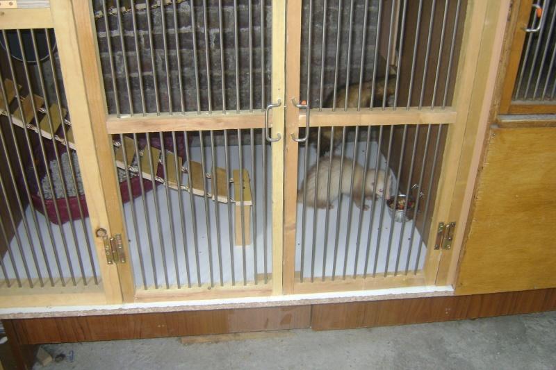 Leurs cages Dsc03216