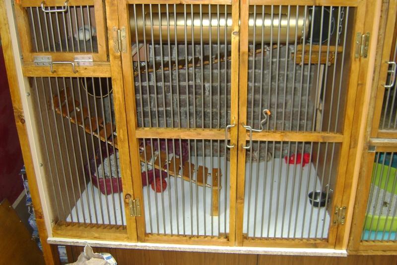 Leurs cages Dsc03217