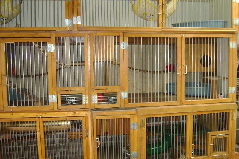 Leurs cages Dsc03220