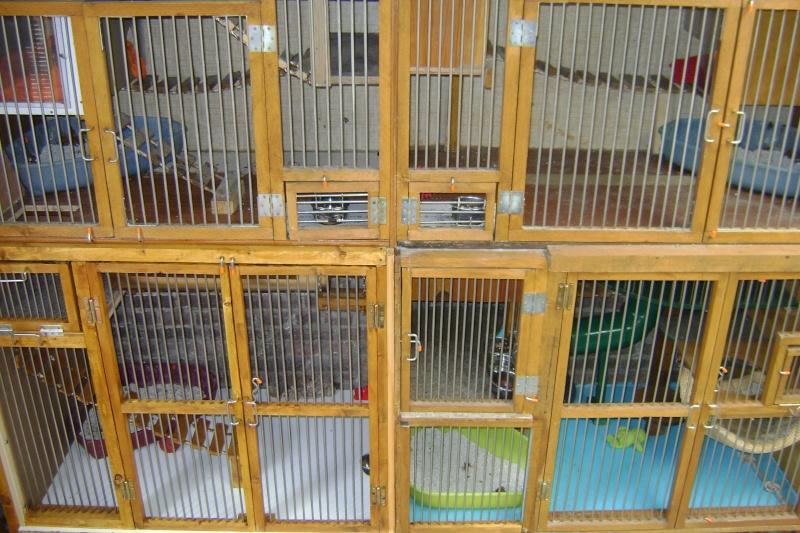 Leurs cages Dsc03221