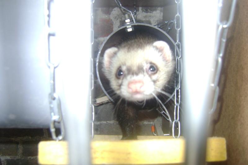 Leurs cages Dsc03222