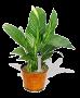 منتدى علم النبات