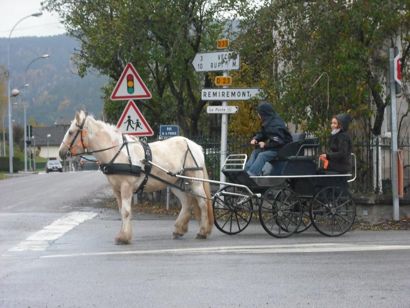 Débourrage, calèche, voyage en roulotte... Dscf7911