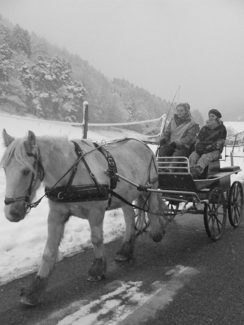 Débourrage, calèche, voyage en roulotte... Dscf9610
