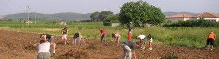 plusieurs dates de travaux collectifs pour les jardins familiaux de Frontignan