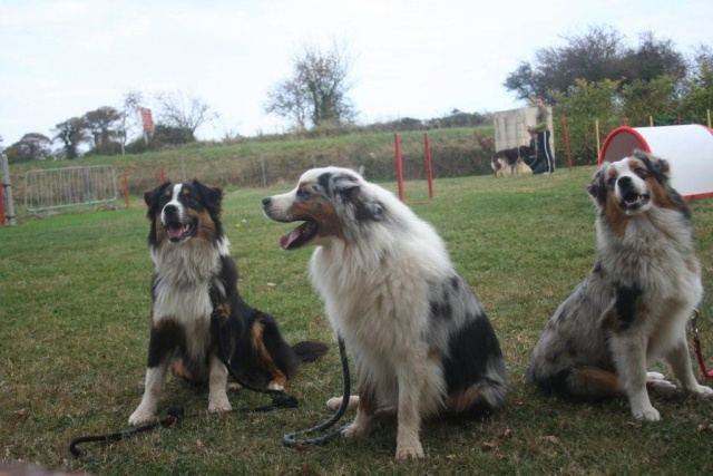 Fifty of fantasia collies Nouvel11