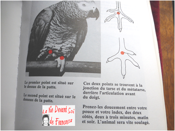 Acupuncture sur animaux domestiques Oiseau10