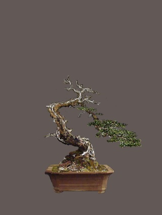 "Pinus sylvestris 2005 - ""Transformations "" Pavels11"