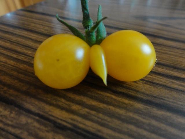 Quelques  tomates    du  jardin  ! Dsc07613