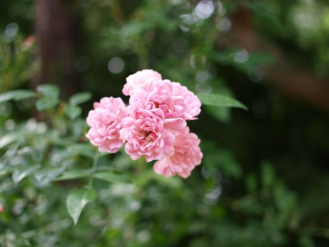 Jardin Albert Khan P8101412