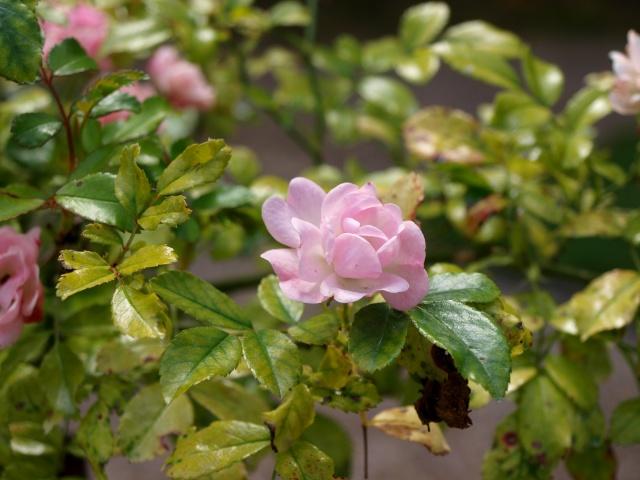 Jardin Albert Khan P8101424