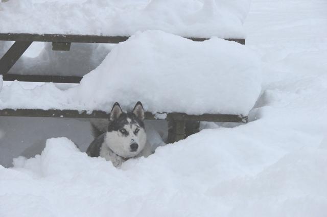 The Three Huskyteers FINALLY got their snow! 02416