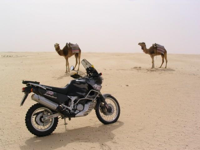 Sei un Alfa-biker ???  Presentati qui !!! Max45128